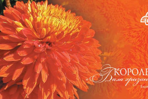 2011_Королева_Escort Rot_открытка